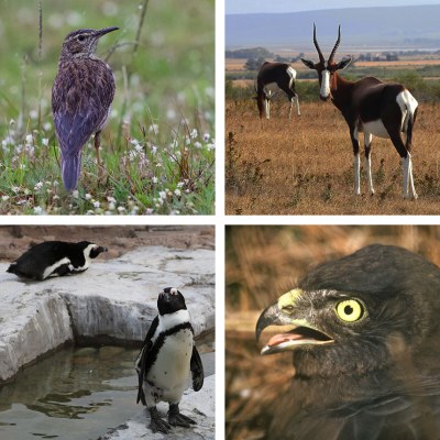 Spreading the love for 4 Overberg 'animals' this Valentine's Day