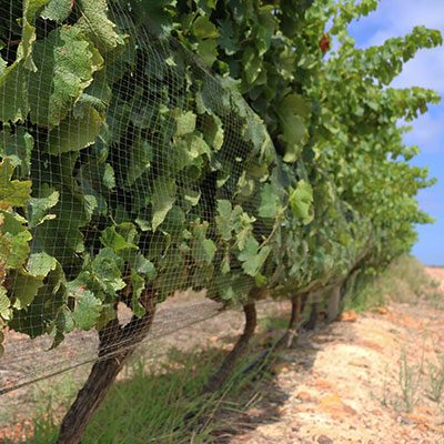 Growing the Overberg's Green Economy