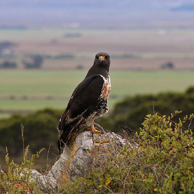 Managing the Overberg landscape collaboratively